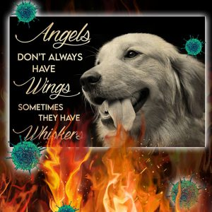 Golden Retriever Angels Don't Always Have Wings Sometimes They Have Whiskers Poster