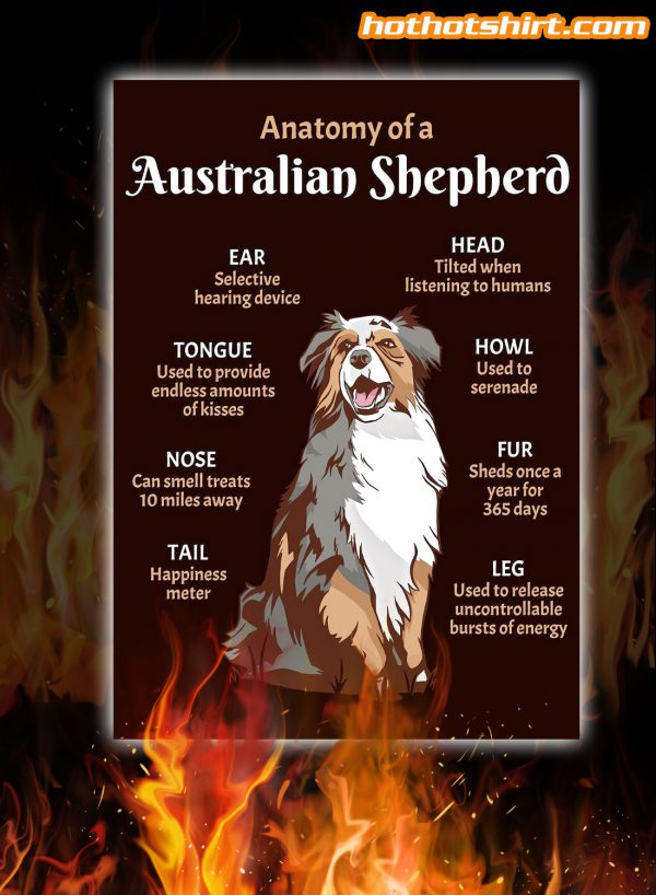 Anatomy Of A Australian Shepher Dog Poster