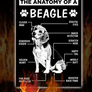 Anatomy Of A Beagle Dog Poster