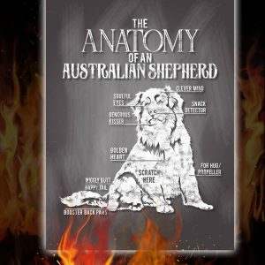 The Anatomy Of A Australian Shepherd Poster